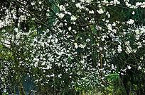 星星点缀的花朵图片