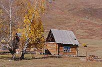 白花树下的小木屋