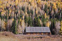 白桦林里的小木屋
