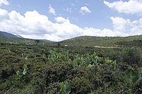 高原上的种植地