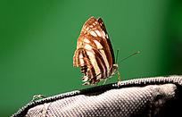 蝴蝶与旅行包