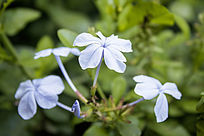 几朵淡蓝色的花卉