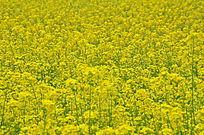 美丽的黄色花儿