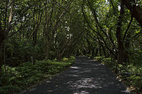 森林间的小路