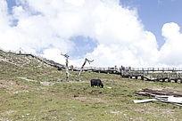 山顶上的牧牛
