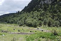 山脚下的牧场