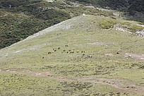 石卡雪山上的草地