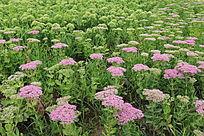 粉色花朵与绿色花朵