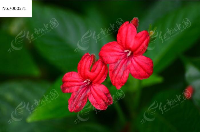 您当前访问图片主题是红色小花风景图片,编号是7000521, 文件格式是