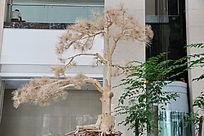 灰色针叶松树