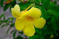 有水珠的黄色花朵