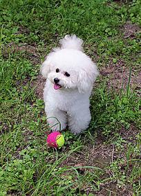 白色的小狗狗