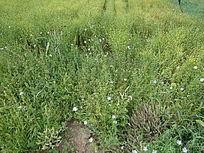 绿色花海田园