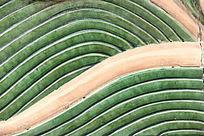 绿水纹背景