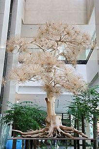 木雕灰色针叶松树