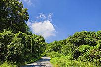 千山木鱼庵路边树林与蓝天白云