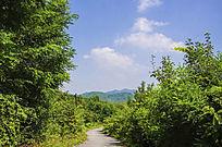 千山木鱼庵路边树林与山峰白云
