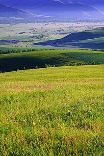 山地草甸景观