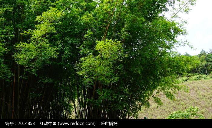 竹子风景图片,高清大图