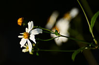 白色小野花