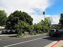 道路景观绿化种植