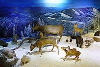 复原的大兴安岭山林野生动物