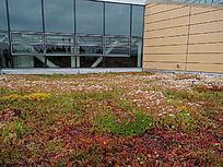户外草地红色花卉种植