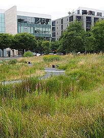 湿地景观园路