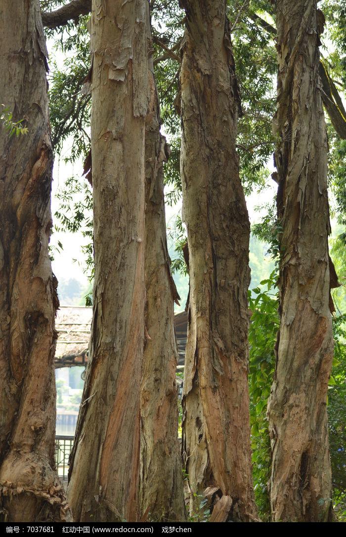 古树树干图片图片,高清大图_树木枝叶素材