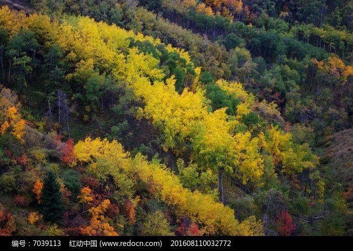 秋天的树林图片,高清大图_森林树林素材