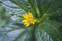 黄色的一朵小花