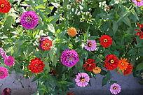 五颜六色的花朵