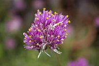 一朵紫色的小花朵