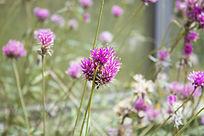 一片紫色的小花朵