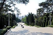 广州烈士陵园柏树林