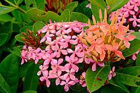 粉红色与橙色的花卉