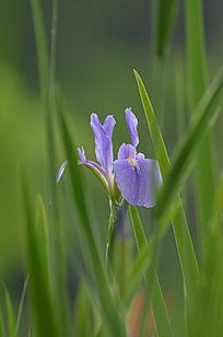 蓝蝴蝶图片,高清大图 花卉花草素材