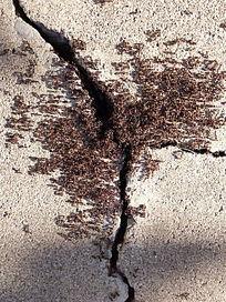 石缝中求雨的蚂蚁堆