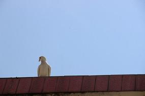 屋脊上的一只白鸽