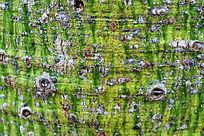 绿色树皮纹路