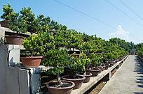 盆景养殖区