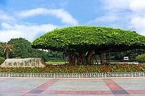 南宁名树博览园