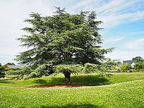 景观乔木绿地