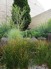 植物组团种植