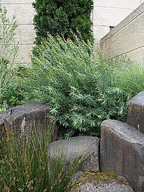 种植草和砌石