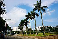 道路椰树绿化