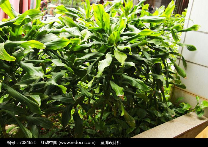 原创摄影图 动物植物 花卉花草 大叶庭院植物  请您分享: 红动网提供