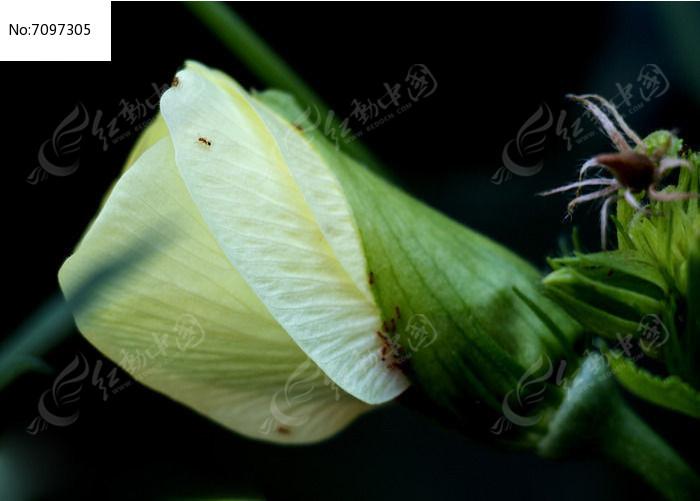 原创v动物图动物葵花蚂蚁植物秋花卉上的小花草石家庄海豚检验检疫图片