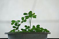 室内植物摆件