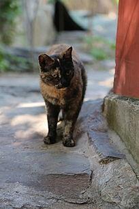 瞪眼的小黑猫